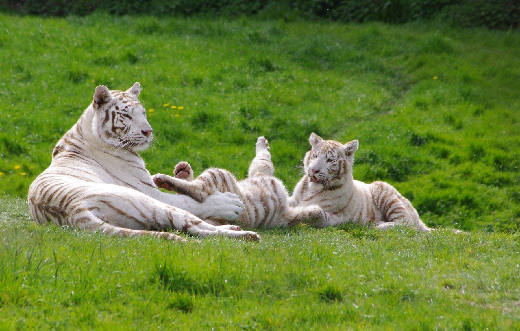 chambres hôtes honfleur activités cerza zoo bois pierres